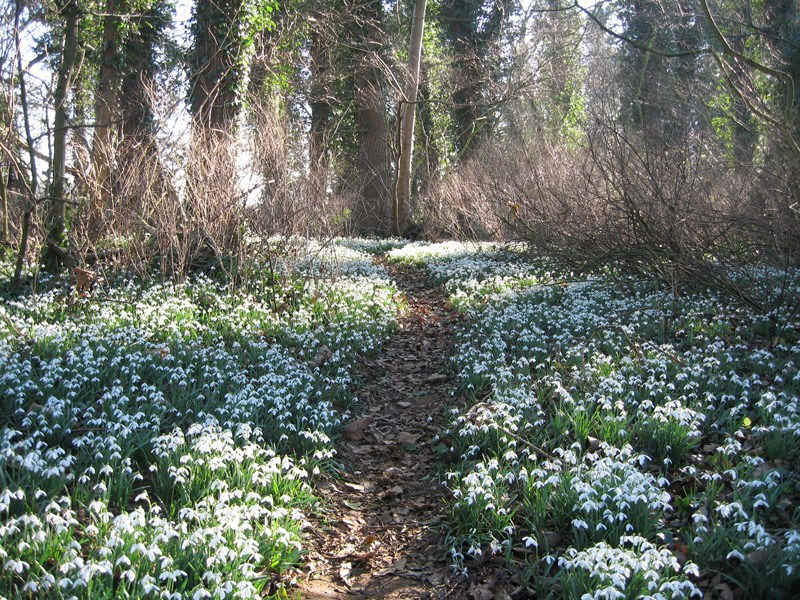 Pastures New: Enjoy The Winter Snowdrop Festival